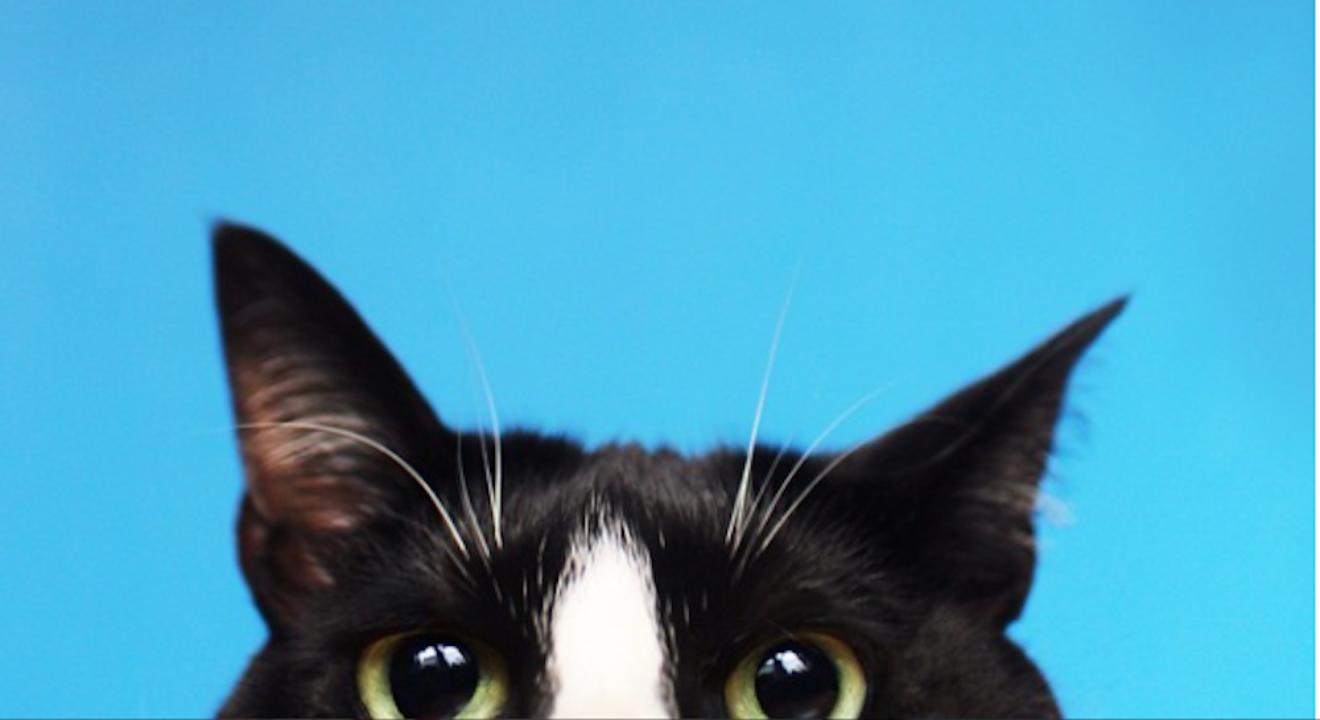 Entity story on cat zodiac sign