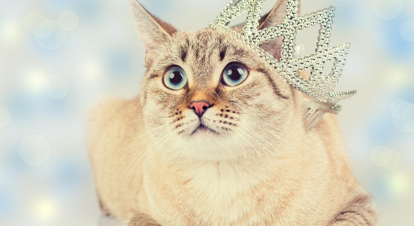 Entity story on cat zodiac signs