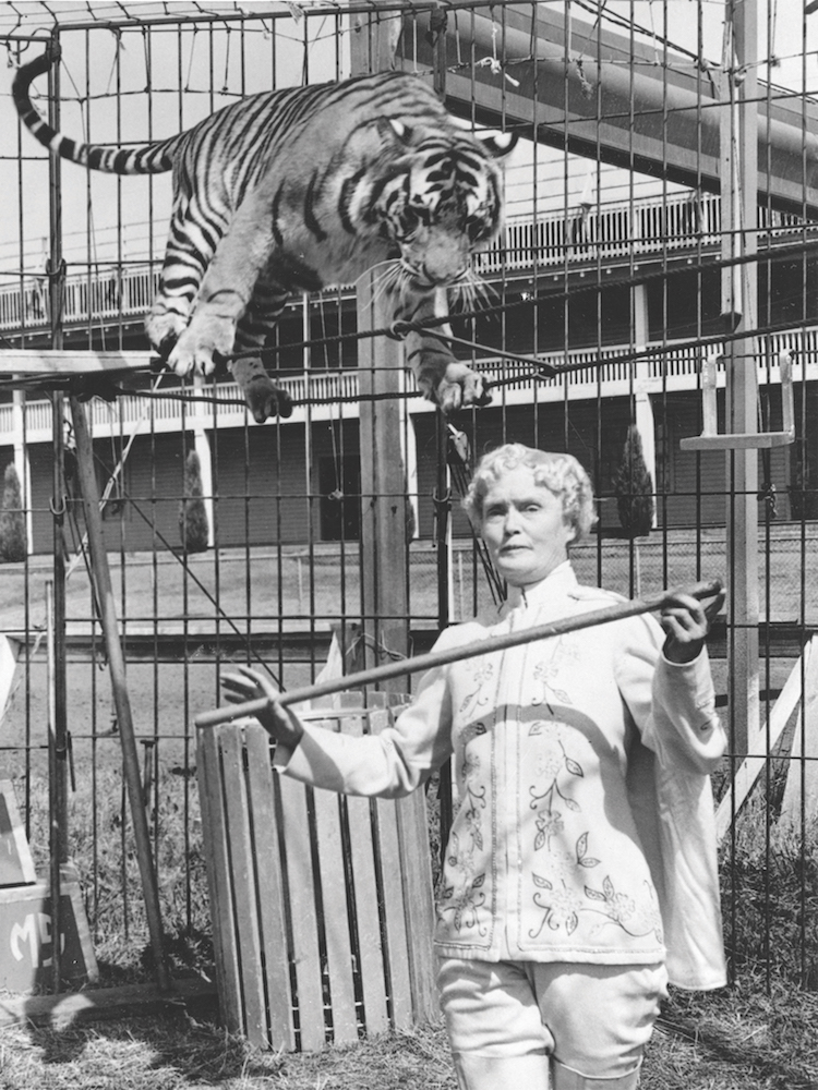 ENTITY highlights the outstanding Mabel Stark, the first female tiger trainer.