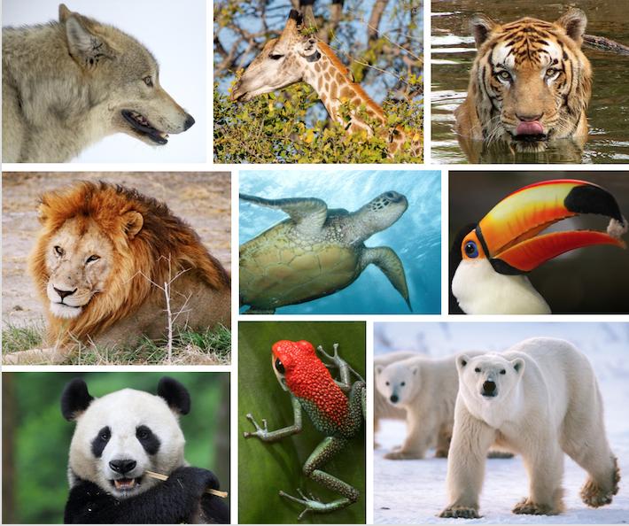 entity discusses endangered species
