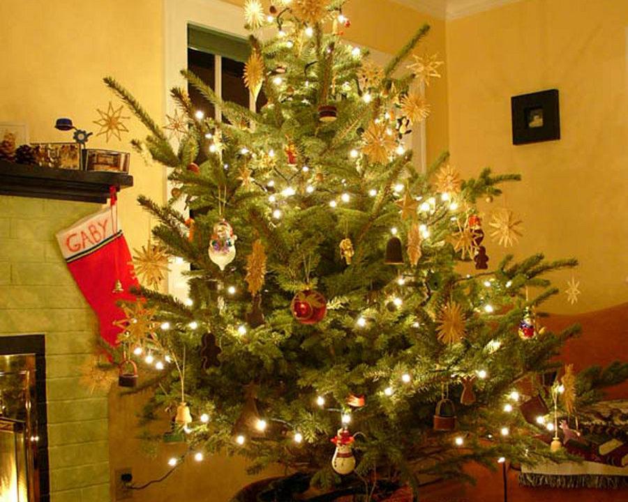 A Greener Christmas Tree - ENTITY