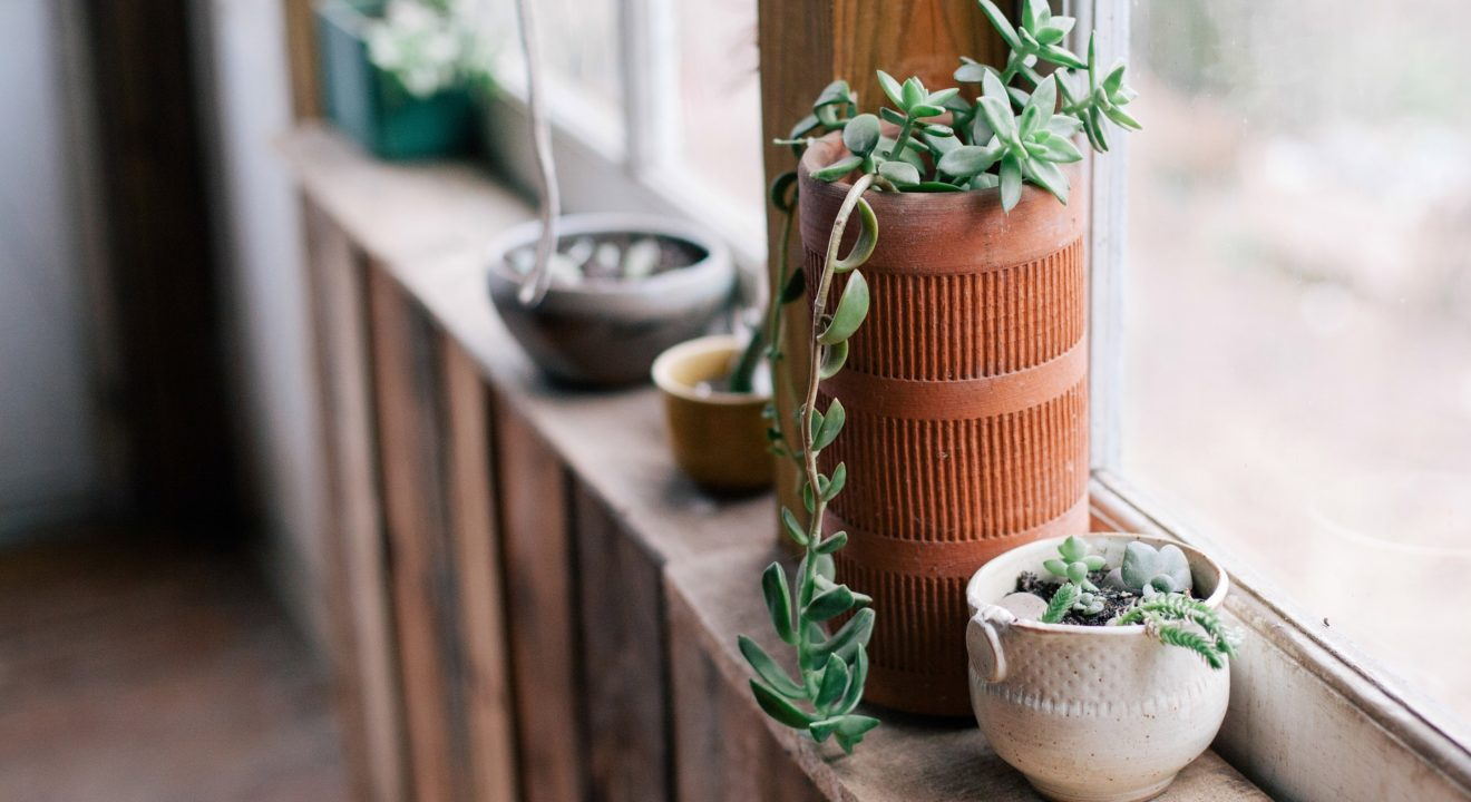 Potted plants are a must have if you want to go zen, Entity reports.