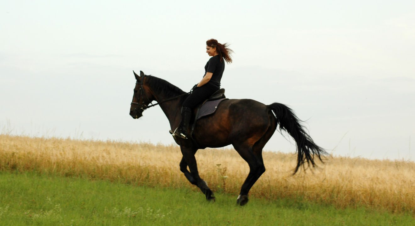 5 benefits of horseback riding for men and women leisurely pursuits