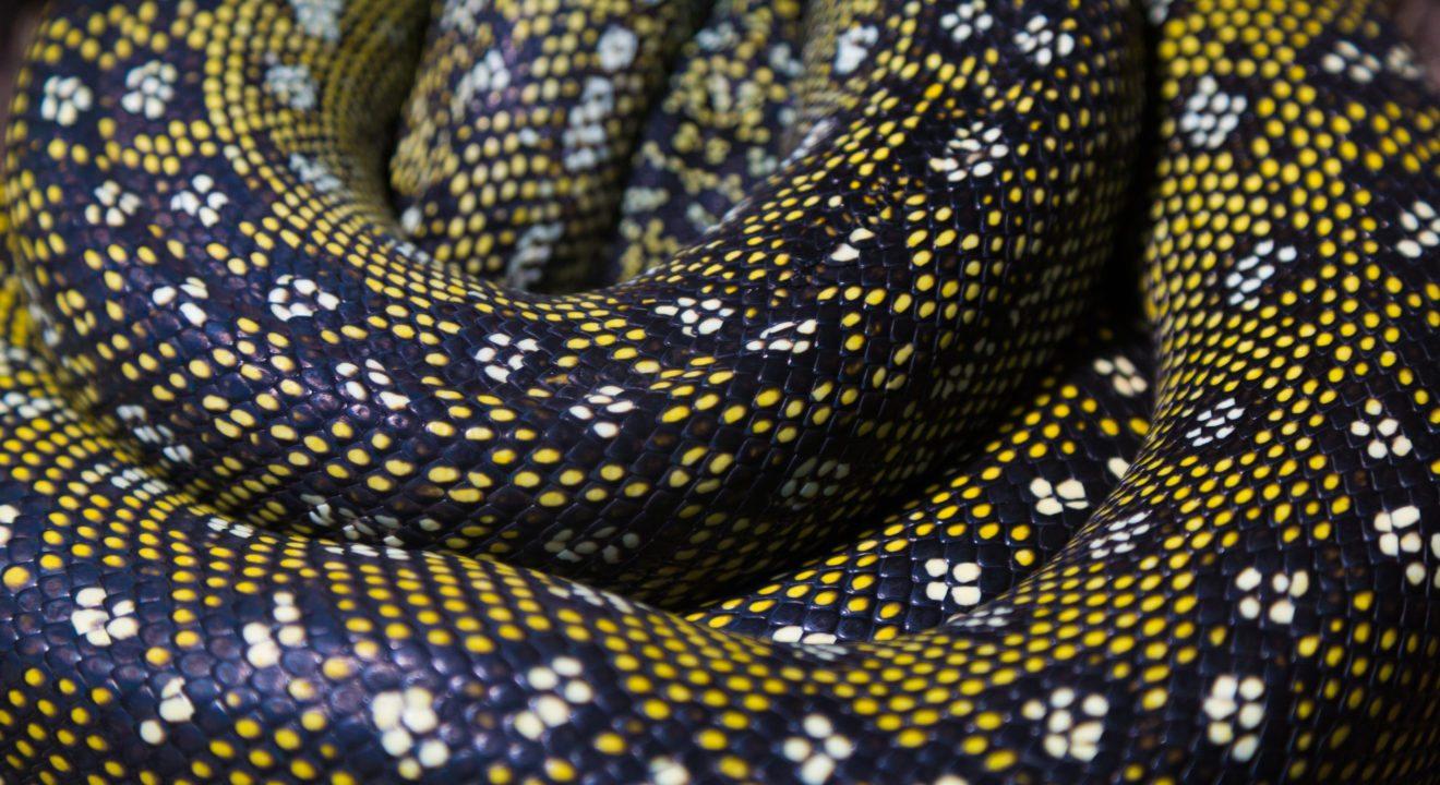 Snakeskin: Cool Or Cruel? Trends