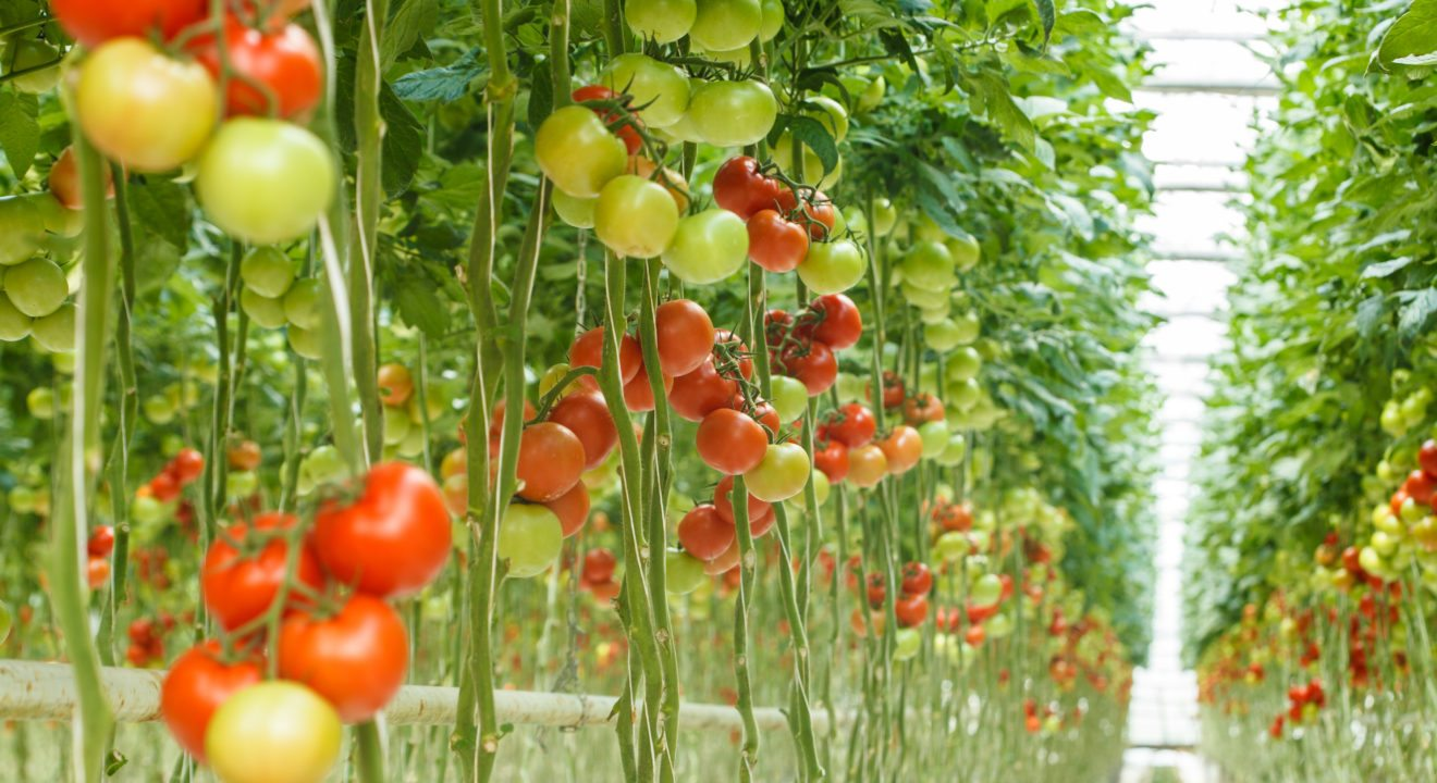 Entity explains why hydroponics gardening systems are the future of agriculture.