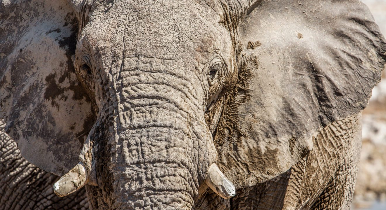 Entity lists the 5 ways Damien Mander is fighting poaching in the African bush.