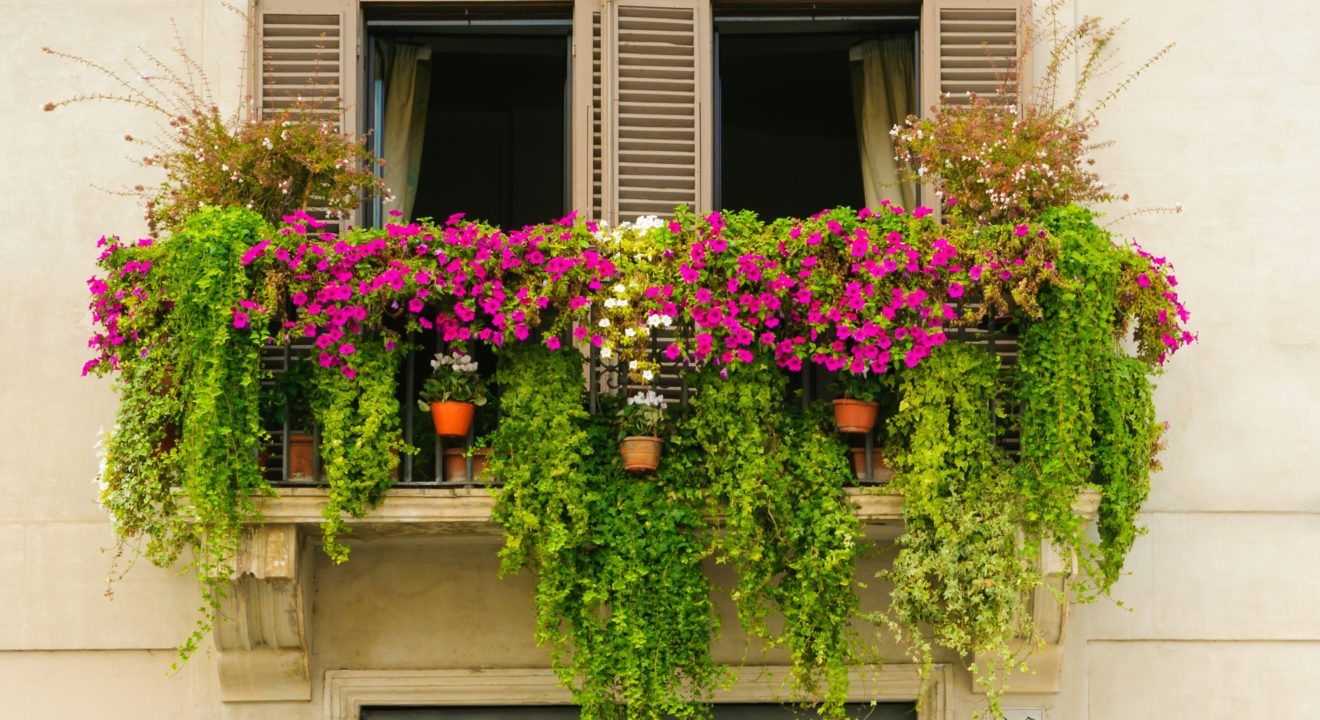 These Are Just The Plants You Need To Start A Balcony Garden
