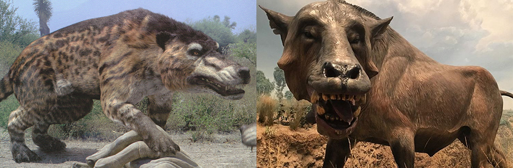 Top 5 Deadly Hybrids We Want To See On The New Season Of The Zoo Cbs