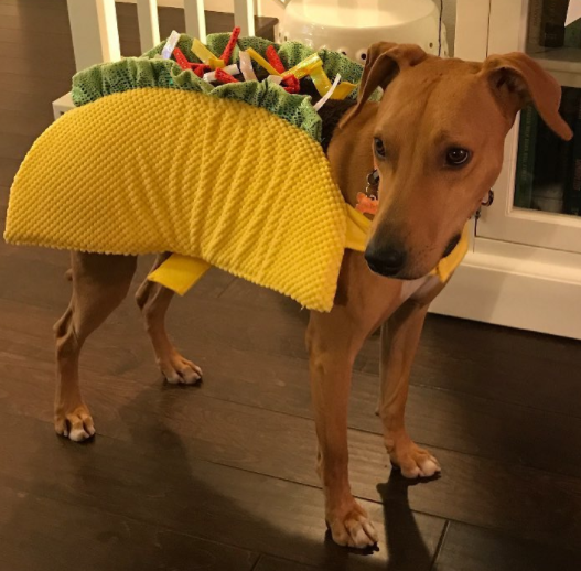 ENTITY report on clever halloween costumes for dogs & Clever Halloween Costumes for Dogs You Can Use This Halloween