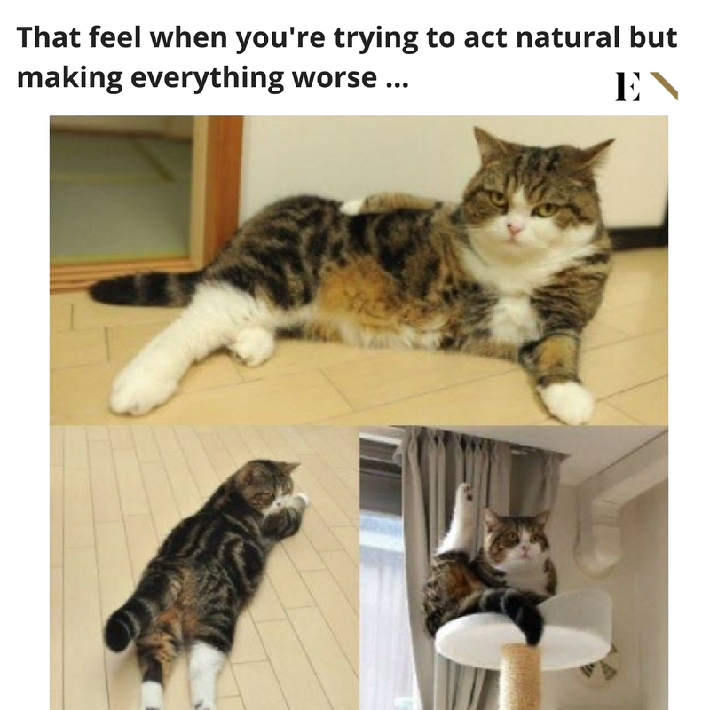 10 Funny Animal Memes That Will Definitely Brighten Up Your Day