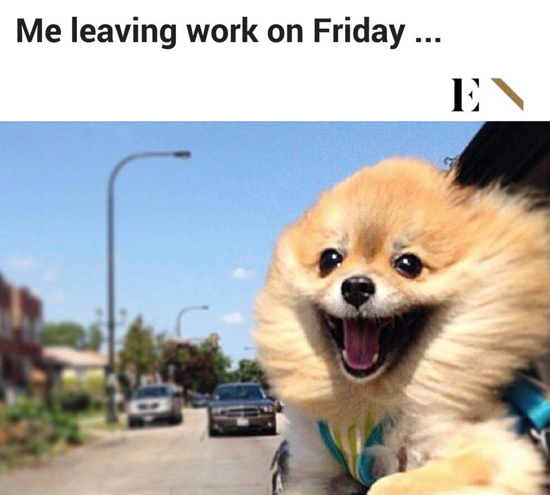 10 Funny Animal Memes That Will Definitely Brighten up ...