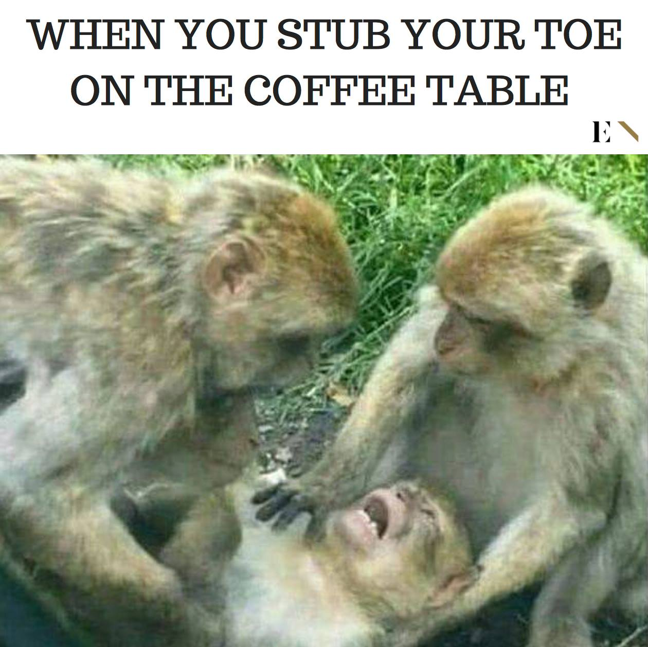 Funny Memes: 14 Funny Memes That Will Leave You On The Floor Laughing