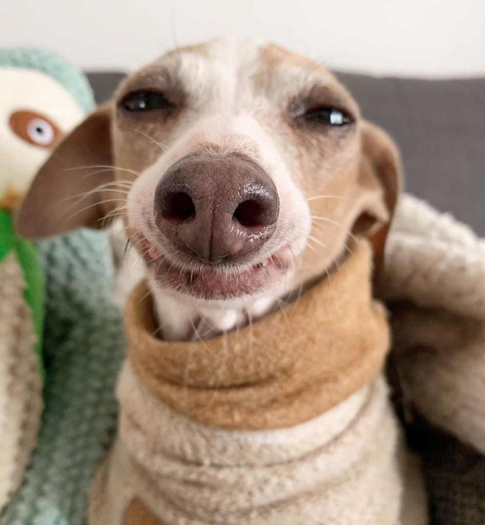 7 Small Hypoallergenic Dogs to Keep Your Roommate Happy